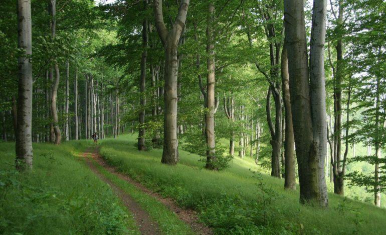 Nachforschungen: Massenmord im Pilisch-Gebirge