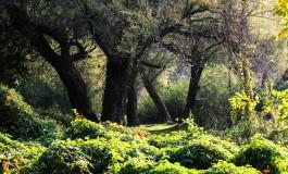"""Für eine nachhaltige Zukunft - Zu Besuch bei """"grünen Schwaben"""" in Werischwar"""